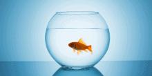 Life Beyond the Fish Tank