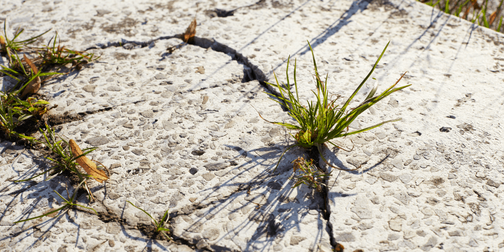 Updated Practices for Resilience for Right Now…and For the Long Haul