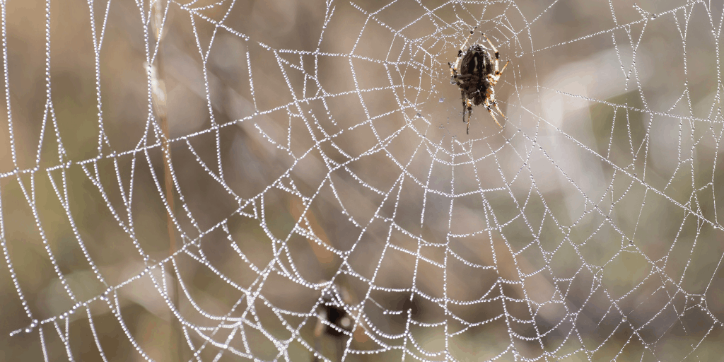 Finding Peace in the Web of Life